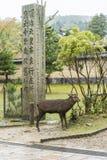  Dai-JI Nara Japan des cerfs communs TÅ de Sika image stock