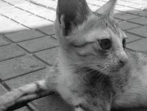  del 😠del gatito de Kitty imágenes de archivo libres de regalías