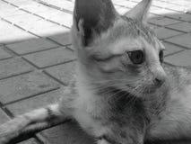  del 😠del gattino di Kitty immagini stock libere da diritti