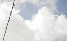 Ð DEL ² Ñ DEL  Ð DI а Ñ DEL ½ DEL ‹Ð DEL † Ñ DEL 'Ð¸Ñ DI Пѷи/uccelli sul contatto Immagini Stock