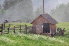 ¡ De Ð aïe dans l'étable et la brume de matin dans les montagnes Images stock