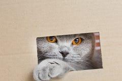 ¡ De Ð aux regards hors de la boîte par une fente photo libre de droits
