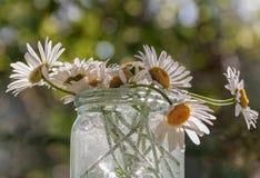 ¡ De Ð hamomile dans un pot en verre Photos stock