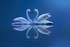 ¡ De l'â de l'amour Photo libre de droits