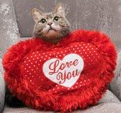 ¡ Di Ð con ad un cuscinetto a forma di del cuore fotografie stock