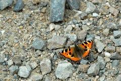 ¡ För kopÅ™ivovà för BaboÄ ka, Aglais urticae, Papilio urticae, Nymphalisurticae royaltyfria foton