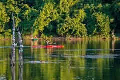 ¡ För odroÅ för Donauö Å nära Novi Sad, Serbien Man i kajak som paddlar på floden royaltyfri bild