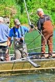 ¡Alaska - guía de la pesca con los salmones en la red! Imagen de archivo