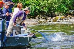 ¡Alaska - salmón en la red! Foto de archivo libre de regalías