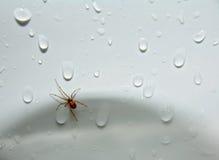 ¡Araña en el fregadero! imagen de archivo libre de regalías