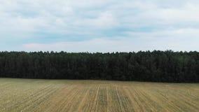 ¡Campos de trigo hermosos! almacen de metraje de vídeo