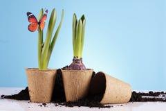 ¡Concepto que cultiva un huerto! Foto de archivo libre de regalías