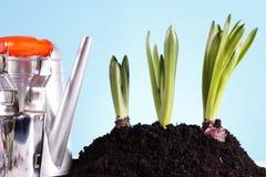 ¡Concepto que cultiva un huerto! Fotos de archivo libres de regalías