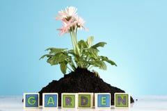 ¡Concepto que cultiva un huerto! Fotografía de archivo
