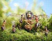 ¡Cuente a cabritos una historia, abeja de la abuela! cuentos de la hormiga Fotografía de archivo libre de regalías