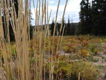 ¡Dixie Forest hermosa! imágenes de archivo libres de regalías