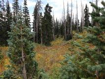 ¡Dixie Forest hermosa! foto de archivo
