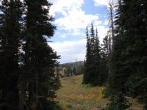 ¡Dixie Forest hermosa! foto de archivo libre de regalías