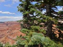 ¡Dixie Forest hermosa! fotos de archivo