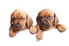 ¡Dos perros envían un mensaje! imagenes de archivo