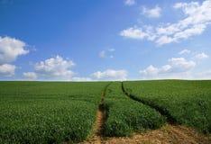 ¡El cielo es el límite! Fotografía de archivo libre de regalías