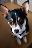 ¡El mejor perro nunca! Imagenes de archivo