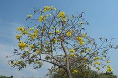 ¡Esta mirada del árbol fantástica sí! él un auténtico fotografía de archivo libre de regalías