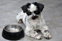 ¡Estoy esperando! Pequeño perro y plato de alimentación vacío foto de archivo