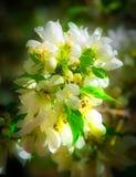 ¡Flor de la primavera - el invierno ha terminado! Foto de archivo
