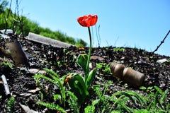 ¡Incluso donde una persona destruye, la naturaleza puede reproducir belleza! foto de archivo