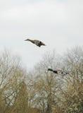 ¡Ir volando! fotografía de archivo libre de regalías