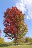 ¡La caída está aquí! ¡Árboles hermosos que cambian color en octubre! fotografía de archivo libre de regalías