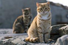 ¡Los gatos les gusta ser tiro! Imagen de archivo libre de regalías