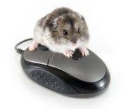 ¡Mi ratón! Fotos de archivo