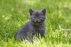 ¡Miaow! Foto de archivo