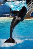 ¡Mundo San Diego - salto del mar de la orca! imagen de archivo libre de regalías