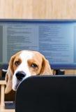 ¡No prevenga por favor para trabajar! foto de archivo libre de regalías