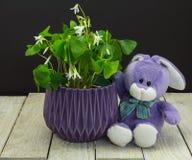 ¡Púrpuras, el color de la primavera! Fotografía de archivo