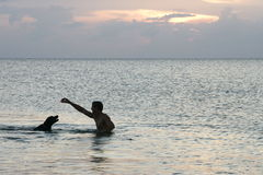 ¡Perro de la nadada! Foto de archivo libre de regalías