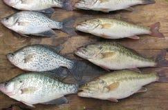 ¡Pescados para la cena! foto de archivo libre de regalías