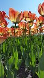 ¡Primavera en Montreal! Fotografía de archivo