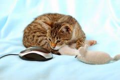 ¡Qué ratón demasiado extraño! Foto de archivo