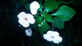 ¡Rosas para usted! foto de archivo libre de regalías