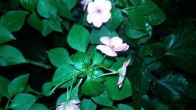 ¡Rosas para usted! imagenes de archivo