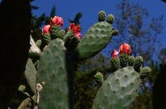 ¡Rose en el cactus! fotos de archivo libres de regalías