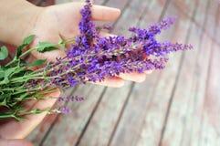 ¡Sabio floreciente en las palmas! Imagen de archivo