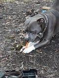 ¡Snackage!!!!! foto de archivo libre de regalías