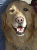 ¡Sonrisa! Imagen de archivo libre de regalías