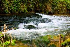 ¡Stony Creek en el bosque! fotografía de archivo