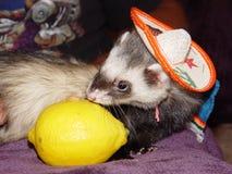 ¡Tequila! Foto de archivo